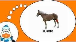 Französisch = Das Pferd # 1