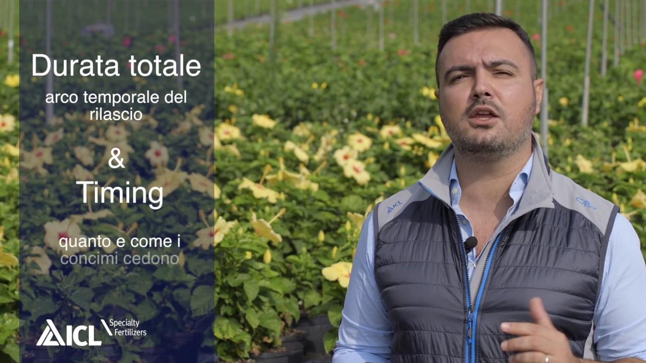 Prove Su Olivo E Oleandro In Clima Mediterraneo Youtube