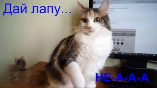 Приколы с котами и кошками  апрель 2018