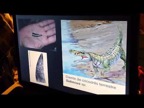Aldo y Purussaurus II