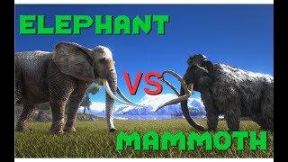 Elephant vs Mammoth, Tiger vs Thylacoleo - ARK Additional Creatures Mod || ARK: Survival Evolved