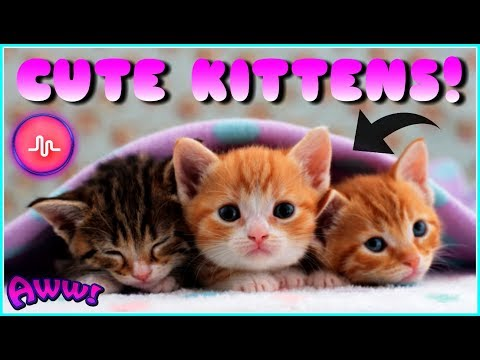 CUTE KITTENS - Funny And Cute Kittens Best Musically Compilation Videos