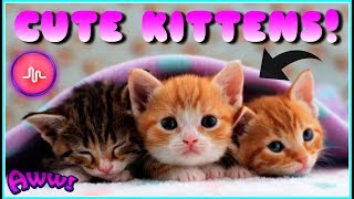 Video CUTE KITTENS - Funny And Cute Kittens Best Musically Compilation Videos download MP3, 3GP, MP4, WEBM, AVI, FLV Juli 2018