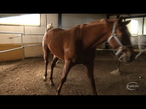 EU ministers to meet over horse meat scandal Travel Video