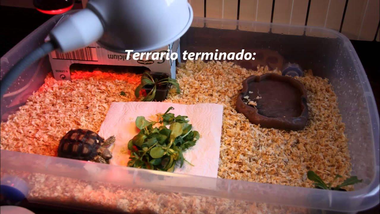 Como hacer un terrario economico para tortugas de tierra - Como construir un terrario ...