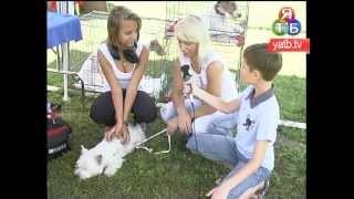 Виставка собак - випуск №02