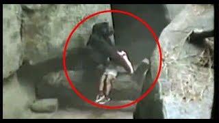 RETO: Si LLORAS PIERDES!!! ANIMALES HEROES! LOS VIDEOS MAS TRISTES DEL MUNDO