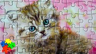 Котик пазл (анимация) - Собираем пазлы - мульт для детей