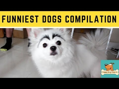 Funniest & Cutiest Dogs Reactions, Bloopers & Fails | Funny Dogs Videos Compilation #15