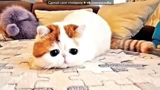 Снупи - самый милый кот в мире