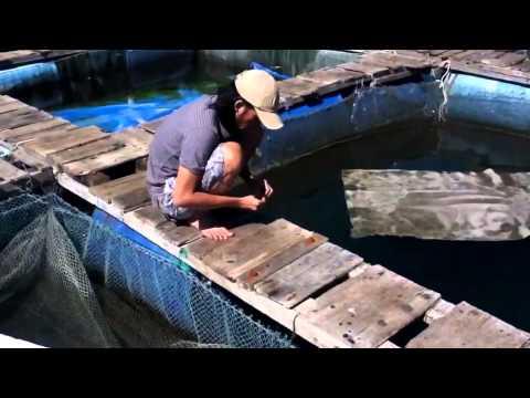 Nghệ sĩ Hoài Linh đi câu cá