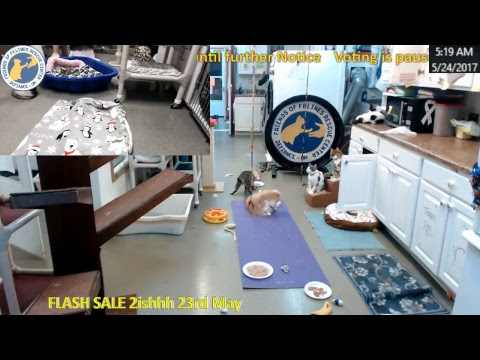 FOFRescueCenter Live Stream