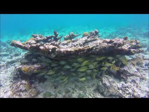 Plongées Cuba février 2017