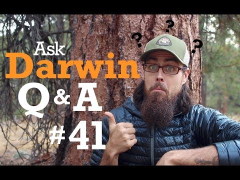 Ask Darwin Q&A #41 (Answers)