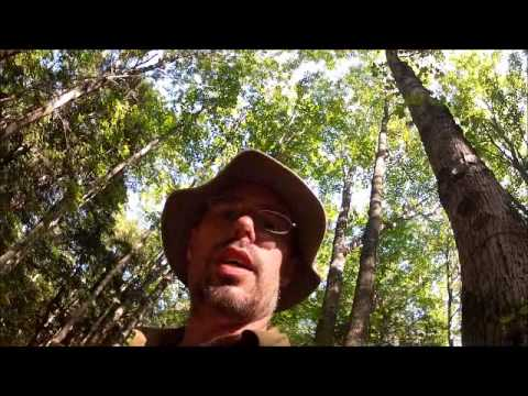DAY 1 OF 5 WAGNER FALLS TO M28 LAKE SUPERIOR 5 DAY HIKE ON NCT