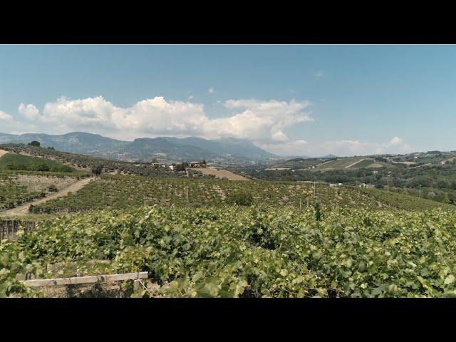 VINEYARDS | PECORINO | PESCARA | THE PORTRAIT OF ABRUZZO'S WINES