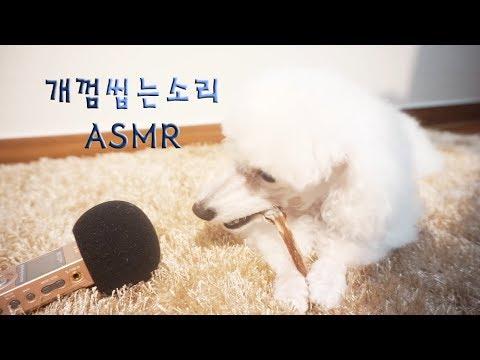 강아지 ASMR 한우 불리스틱 이팅사운드