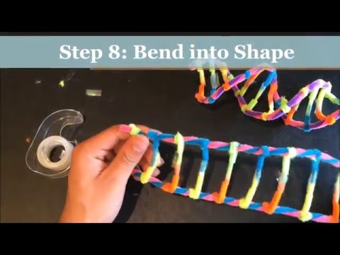 HOW TO MAKE A DNA MODEL USING PIPECLEANERS. PROJECT DEMONSTRATION