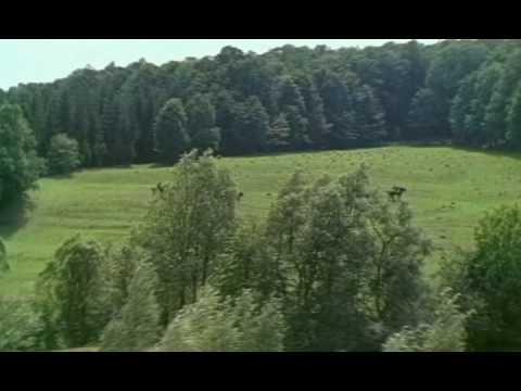 Карьера Димы Горина (1961) Полная версия