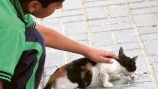 حملة إطعام قطط وطيور الشوارع