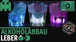 Alkoholabbau Leber einfach erklärt│Biologie Lernvideo [Learning Level Up]