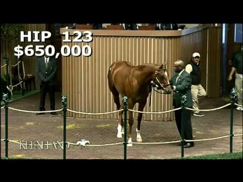 Hip #123, $700,000 Majestic Warrior Colt, 2012 April Sale