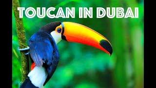Toucan In Dubai Creek Park 😻