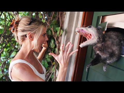 Killer Possum Prank!