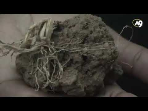 The structure of soil is ideally suited