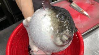 1.(혐 주의!!!)복어 해체 둘러보기/ 복어손질 / 복어독 제거 / 복어회 준비 / 복어조리기능사/ 오로시 /fugu/blow fish/puffer fish