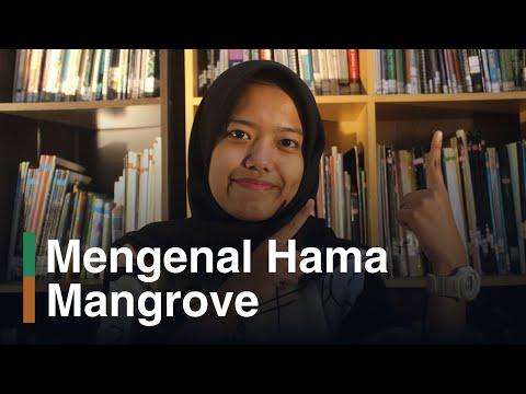 Jenis Hama Mangrove dan Cara Mengatasinya