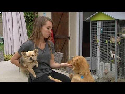 """Lillebonne (76) : Léa, """"pet-sitter"""" professionnelle"""
