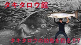 伝説の巨大魚タキタロウを追って・・・タキタロウの幼魚を釣りに!!!? タキタロウ館へ勉強に行ってきた! ツリアメ