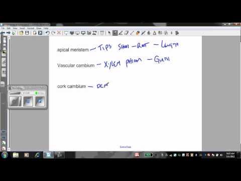 Plant morphology and transport
