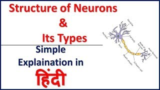 Structure of Neurons and Its Types Simple explaination in Hindi | Bhushan Science