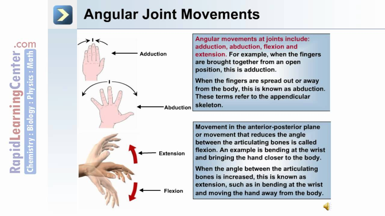 The Skeletal System 2 Types Of Joint Movements Youtube