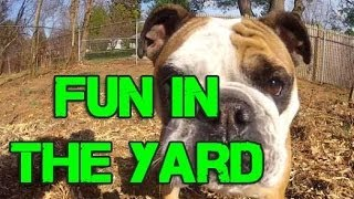 Fun in the Yard!