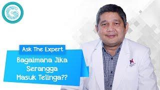 Waspada Bahaya Serangga Masuk Telinga - dr. Bono Humana Mahyudin, SpTHT-KL