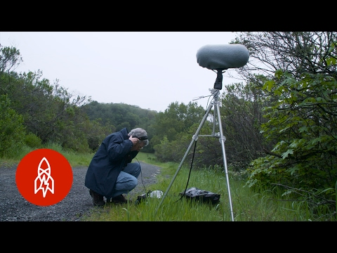 Recording the Sounds of Extinction