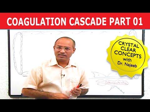 Coagulation Cascade - Part 1/12