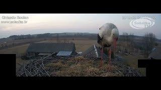 Kamera IP: Gniazdo Bocianie pod Sokółką [NA ŻYWO] | IP Camera: Stork