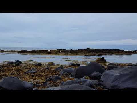 Robben vor Island Teil 2