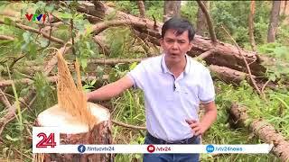 Một vụ phá rừng táo tợn tại huyện Lâm Hà, tỉnh Lâm Đồng | VTV24