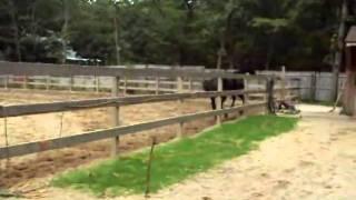 Eminem Mix Horses