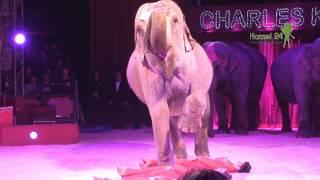 7 Tage im Zirkus