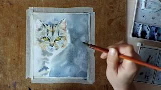 Картина акварелью Зеленоглазый кот. Speed painting
