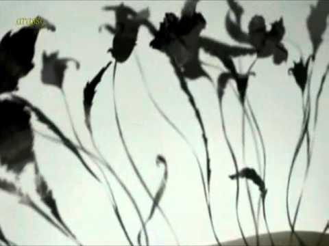 Silent Spring - E. Fraser