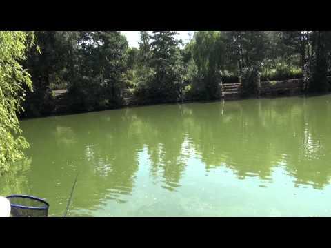 COURT FARM FISHING LAKES, ALDERMASTON, READING, BERKSHIRE
