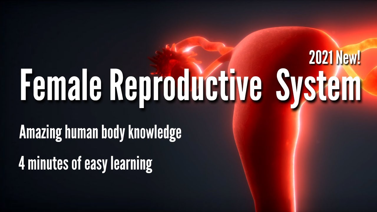 Female Reproductive System 2021 | 4 minutes of easy learning mystery Female Body