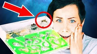 МУРАВЬИ УМЕРЛИ!  КЛАДБИЩЕ МУРАВЬЕВ! Массовая смерть муравьев в формикарии Magic Family